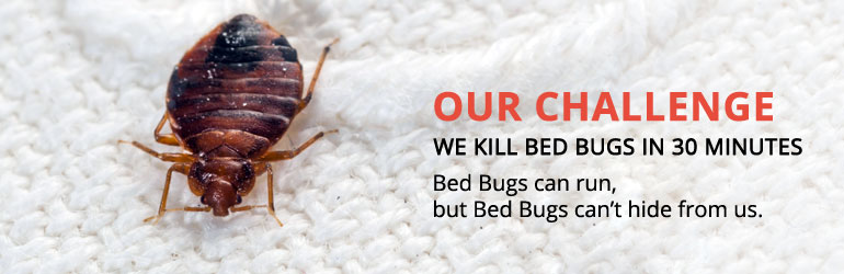 Bed Bugs Treatment & Herbal Pest Control Services Bangalore