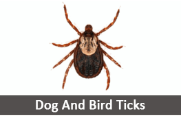 Dog Ticks Bird Ticks Pest Control Services