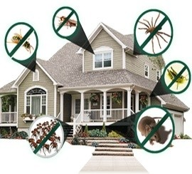A to Z Pest Solutions & Herbal Pest Control Services